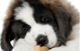 Hondenwereld