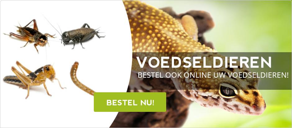 Levende Voedseldieren Banner Reptielenwereld