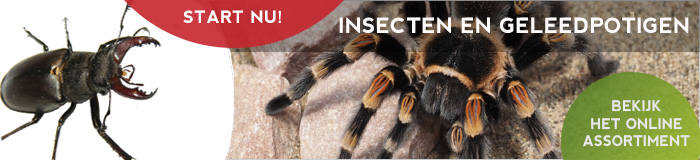 Insecten en geleedpotigen houden en kopen