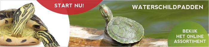 Waterschildpadden kopen